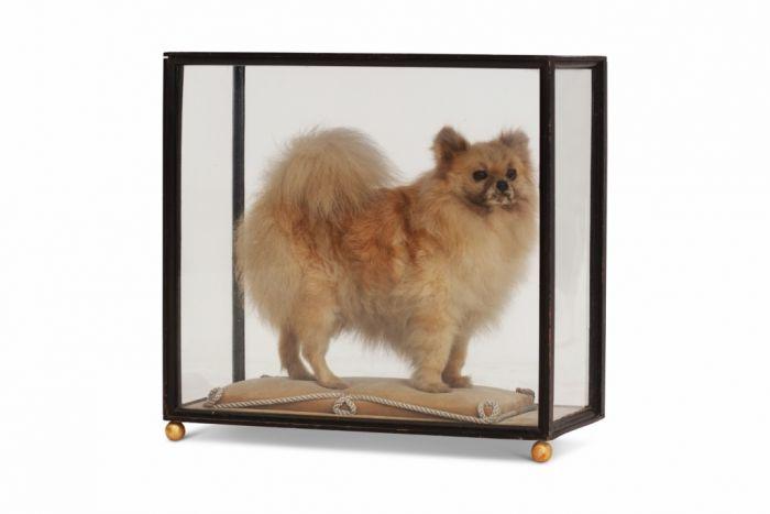 Paris's Pomeranian